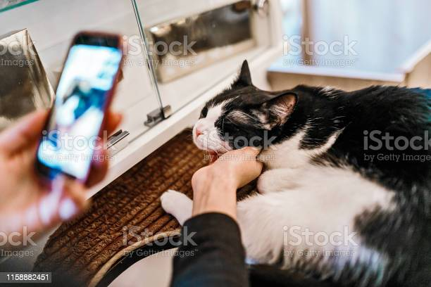 Woman making a photo of a cat with her smartphone picture id1158882451?b=1&k=6&m=1158882451&s=612x612&h=r6to9edr 8ut8 t2qqn  ke sc 4pjebveofe23l zu=