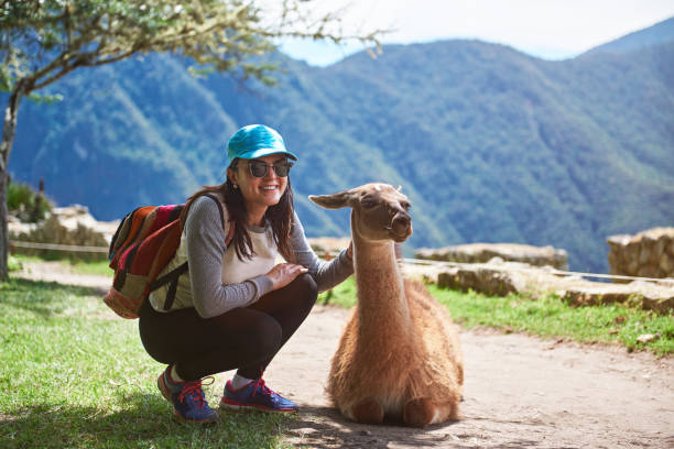 Woman meet lama in hiking trail stock photo