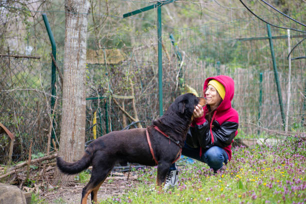 Woman meeting her new dog at the shelter stock photo