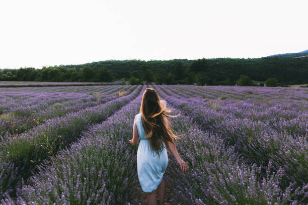 Woman meets summer sunset at beautiful lavender flower field in France stock photo