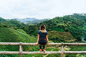 Woman sitting on the background of te  plantation in  Mae Hong Son in Thailand
