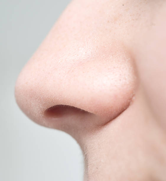 woman nose close up of woman nose human nose stock pictures, royalty-free photos & images