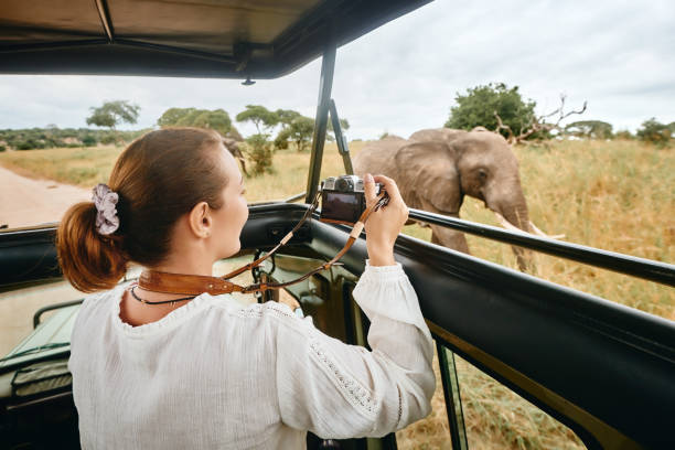 A woman on an African safari travels by car with an open roof and photograph wild elephants stock photo
