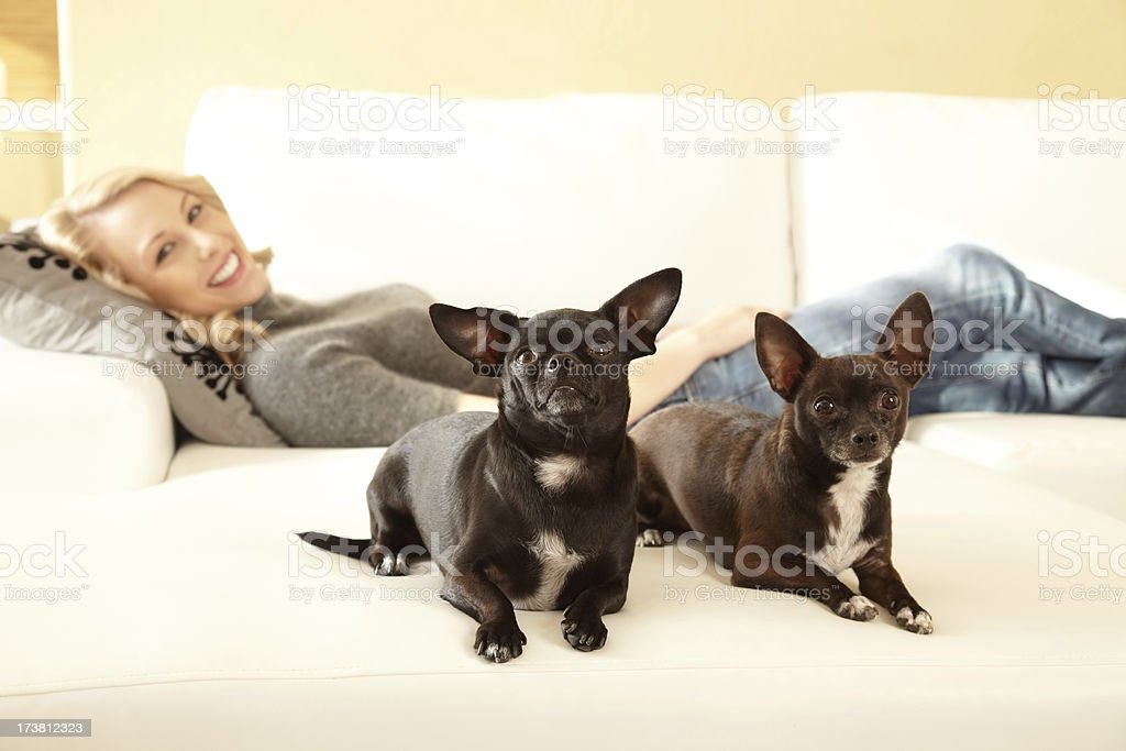 Woman on couch with two chihuahuas in foreground royalty-free stock photo