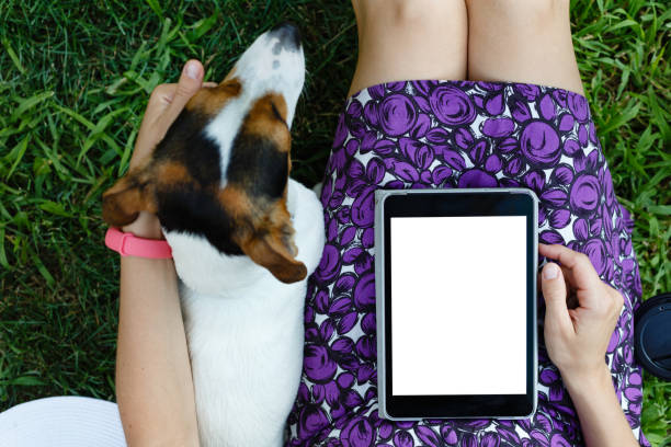 Woman on grass with tablet stock photo
