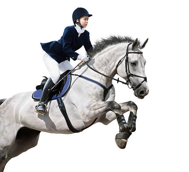 woman on white horse leaping on white background  - hästhoppning bildbanksfoton och bilder