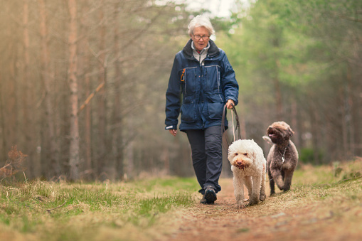 Woman out walking two dogs in a forest