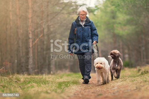 istock Woman out walking two dogs in a forest 532865740