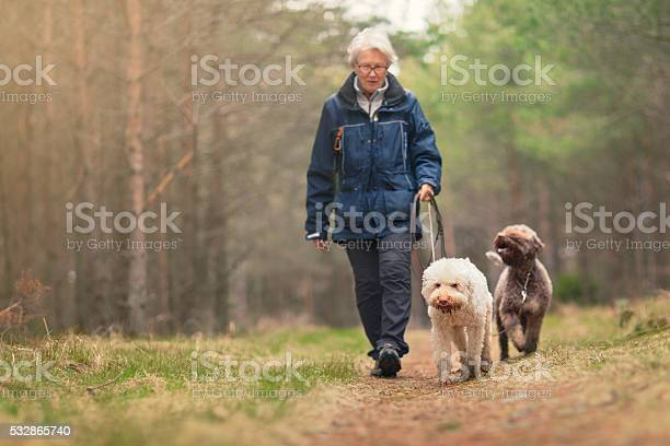 Woman out walking two dogs in a forest picture id532865740?b=1&k=6&m=532865740&s=612x612&h=dclh27feyb ej6uqr9x mnadx6desgdx1fgkfb6q9oc=