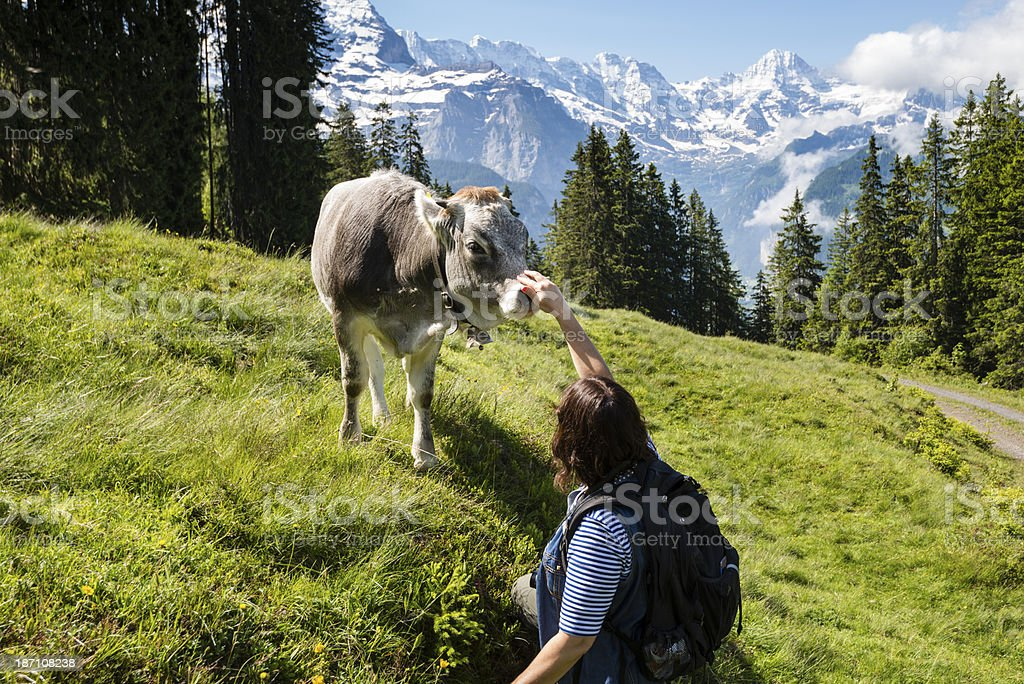 Woman petting a friendly calf with mountains in background-XXXL royalty-free stock photo