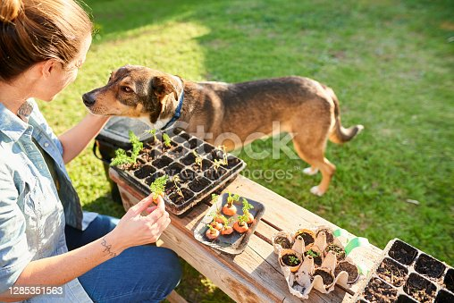 Woman petting her dog while gardening in her yard