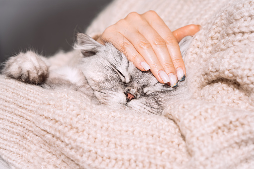 Woman petting her lovely fluffy cute cat. Cute kitten with closed eyes. Love cats and humans.
