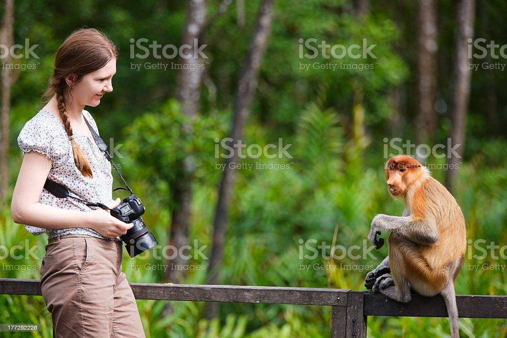 A woman photographer and a proboscis monkey stock photo