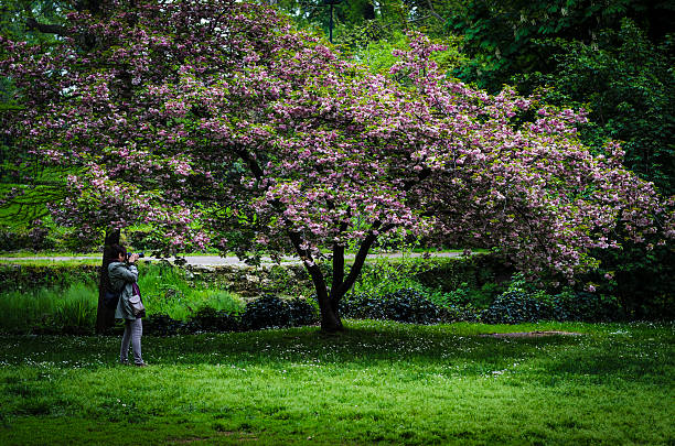 woman photographing a tree with pink flowers foto