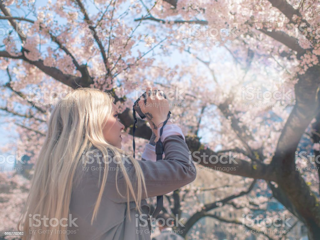 Woman Photographing Cherry Blossom foto stock royalty-free