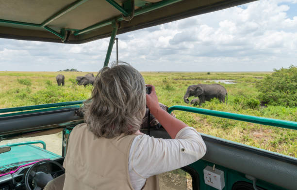 Woman photographing elephants in safari jeep, Africa Woman in safari jeep taking picture of elephants, Africa, Serengeti national park. Camera on bean bag. east africa stock pictures, royalty-free photos & images