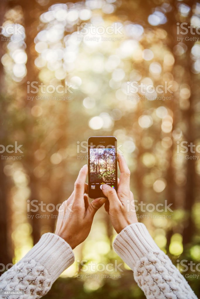 Woman photographing trees through smart phone stock photo