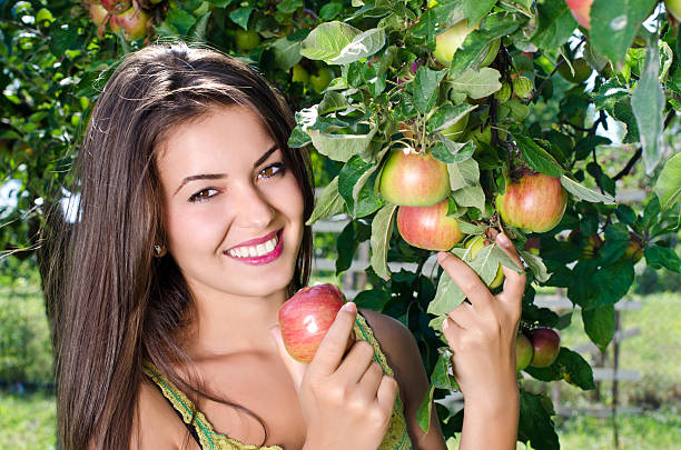 Woman picking a ripe apple from the tree. stock photo