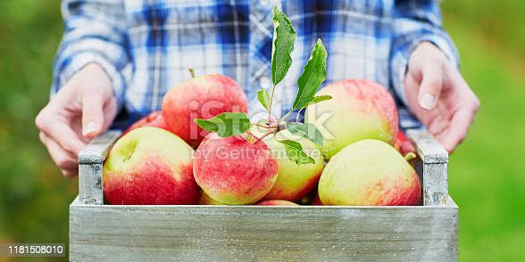istock Woman picking apples in wooden crate 1181508010
