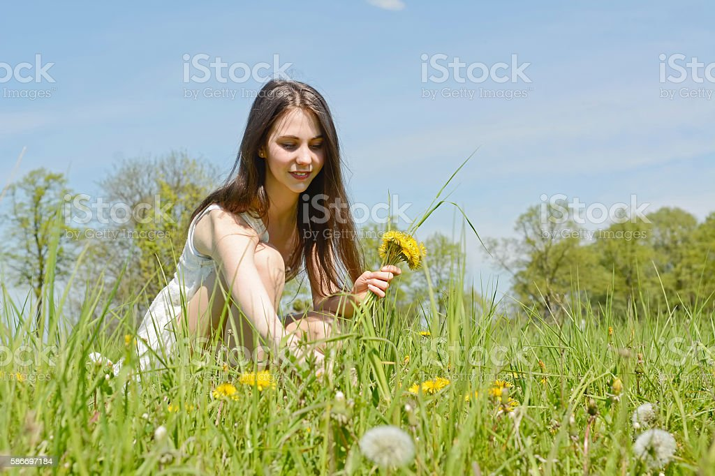 woman picking dandelions stock photo