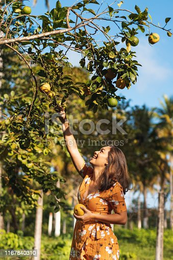 Orange Tree, Picking Up, Orange Fruit, Harvesting, Fruit Tree