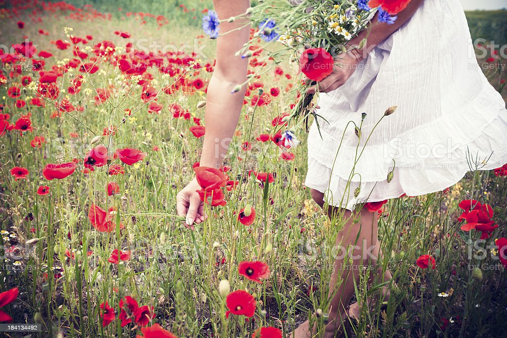 Woman picking poppy flowers stock photo