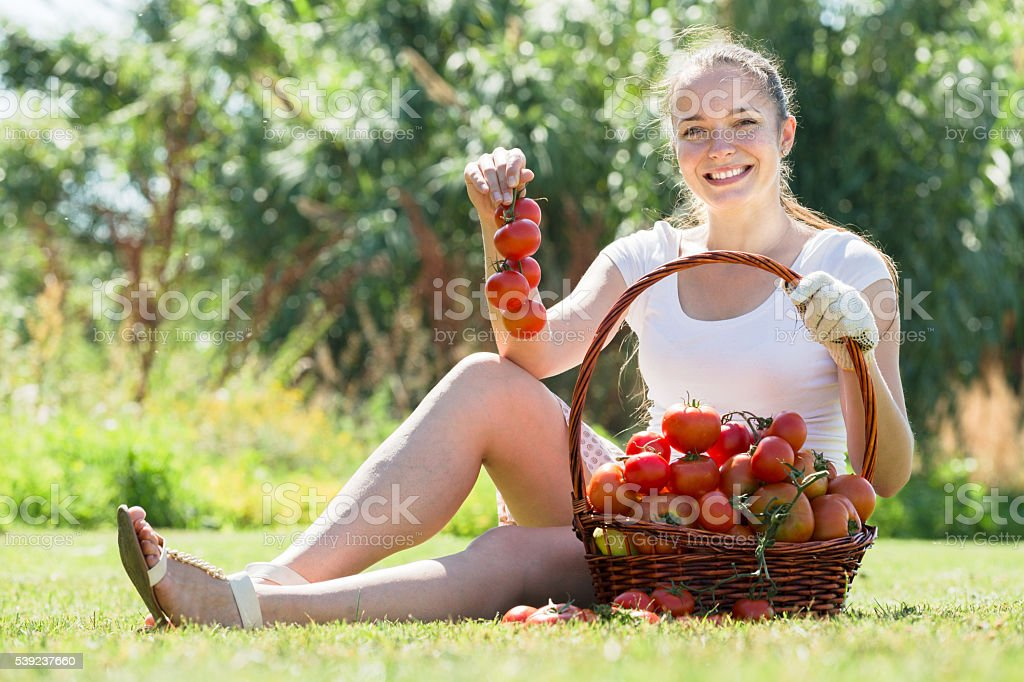 woman picking tomato in field royalty-free stock photo