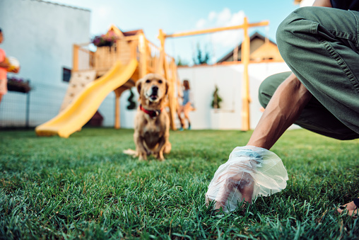 Woman picking up dog poop from the lawn