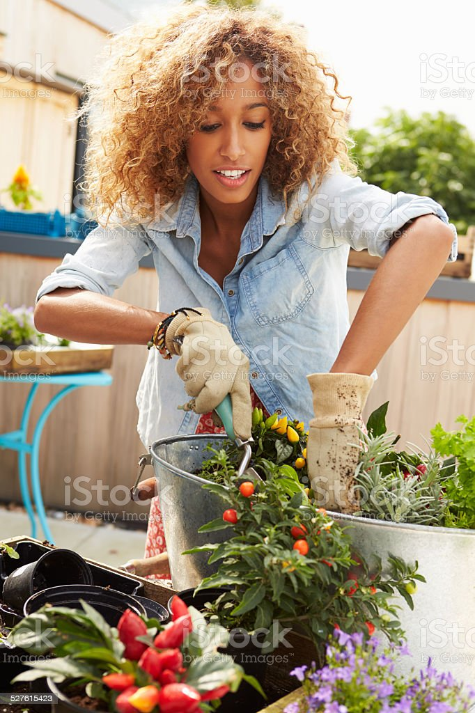 Woman Planting Container On Rooftop Garden stock photo