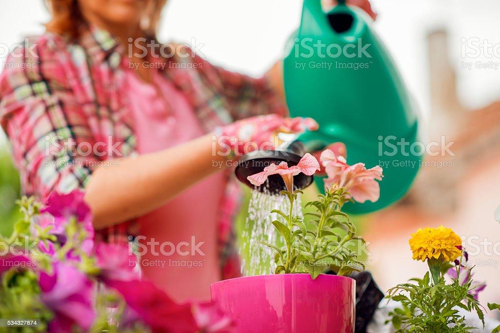 Woman planting flowers stock photo