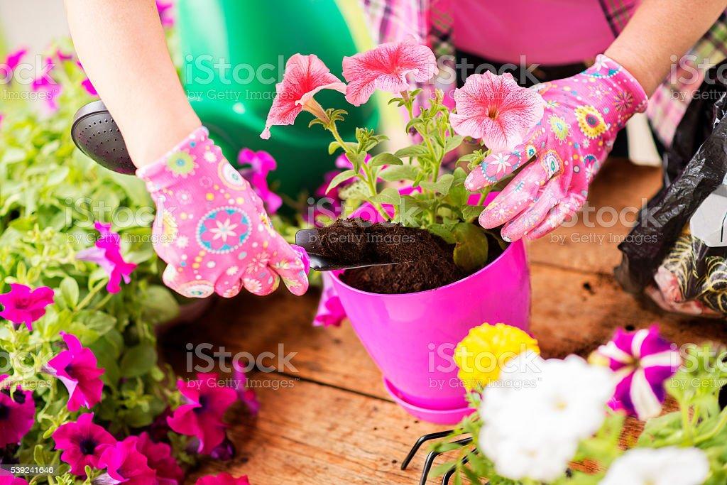 Mujer Plantando flores foto de stock libre de derechos