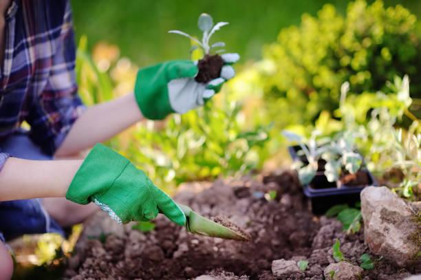 Femme de planter des semis dans son lit dans le jardin à la journée d'été ensoleillée - Photo