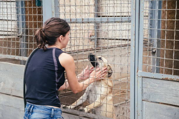 Woman play with homeless dogs in animals shelter stock photo