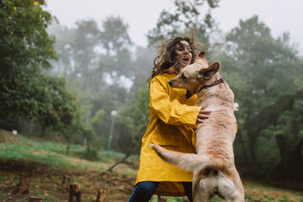 woman playing with a dog in the woods - dog jumping stock photos and pictures