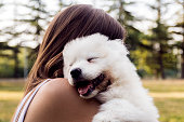Happy woman playing in the Park with a white fluffy dog breeds Samoyed