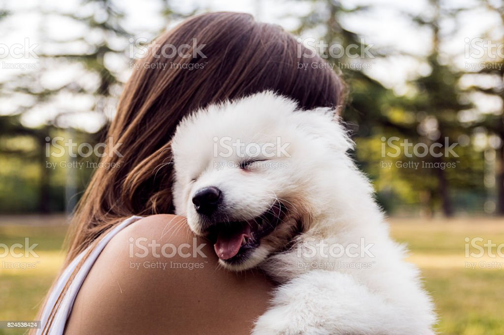 Woman playing with a small dog stock photo