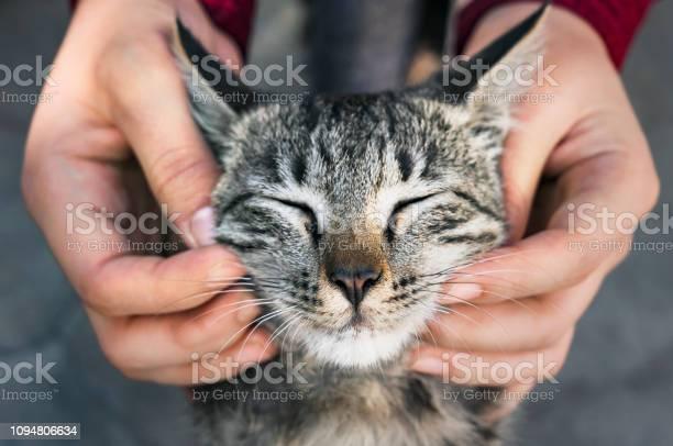 Woman playing with a stray cat picture id1094806634?b=1&k=6&m=1094806634&s=612x612&h=2snvtgmzxj0tvhyvvkaz12omoyngu b3ckesok87jjy=