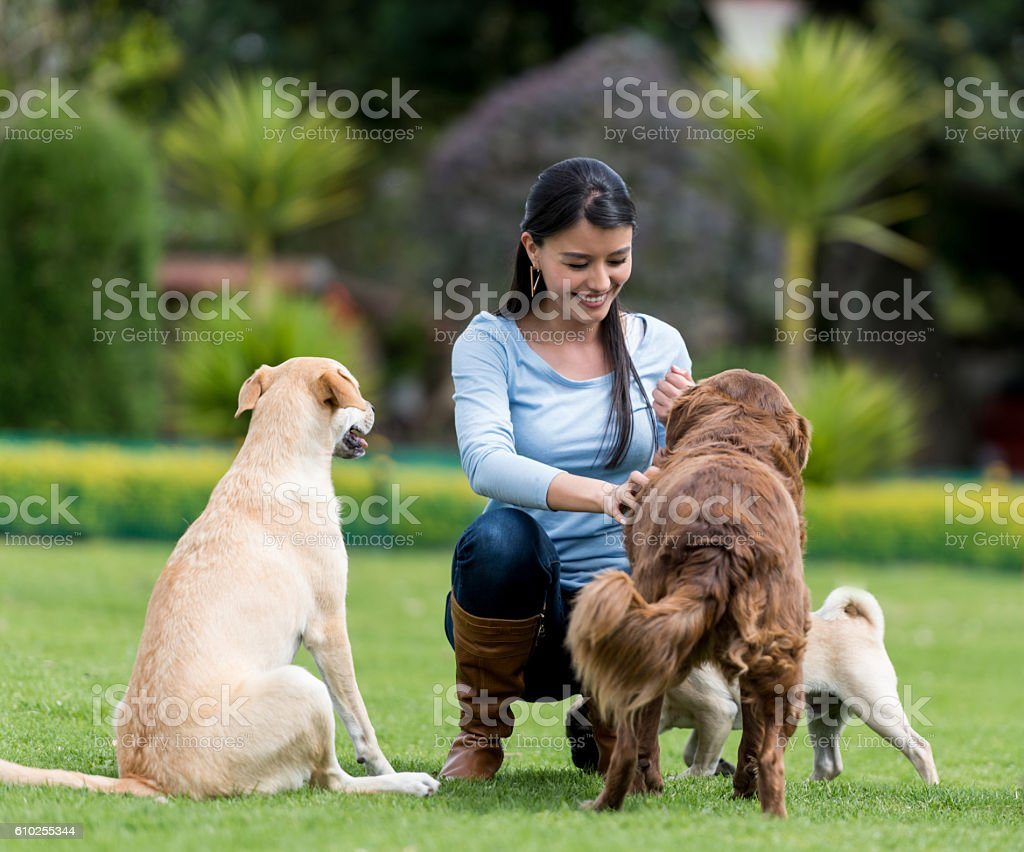 Woman playing with adopted dogs stock photo