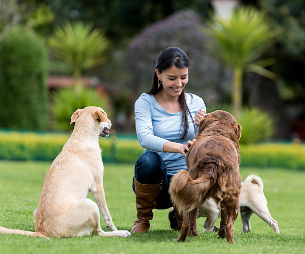 woman playing with adopted dogs - haustier des lehrers stock-fotos und bilder