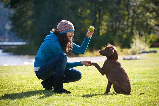 formação de cachorrinho - training imagens e fotografias de stock