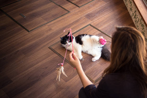 Woman playing with cat in a Tokyo cat cafe stock photo