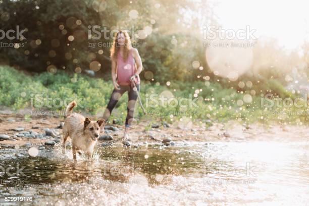 Woman playing with dogs at river picture id829919176?b=1&k=6&m=829919176&s=612x612&h=vxo1ibph0cixz4td2o3das0mbyl0qugypezucec6ctw=