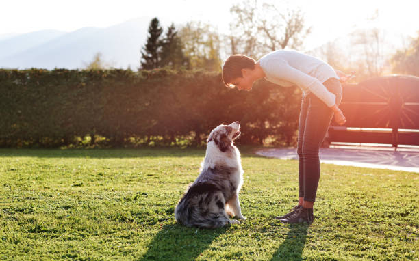 Woman playing with her dog in the garden Woman playing with her dog in the garden on a sunny day, they are staring at each other australian shepherd stock pictures, royalty-free photos & images