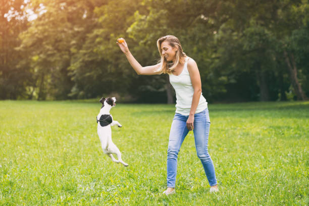 Woman playing with her dog jack russell terrier picture id973428404?b=1&k=6&m=973428404&s=612x612&w=0&h=iia8jf2w ydra4bcouf1qsa ogjzdwautelrb0yqlps=