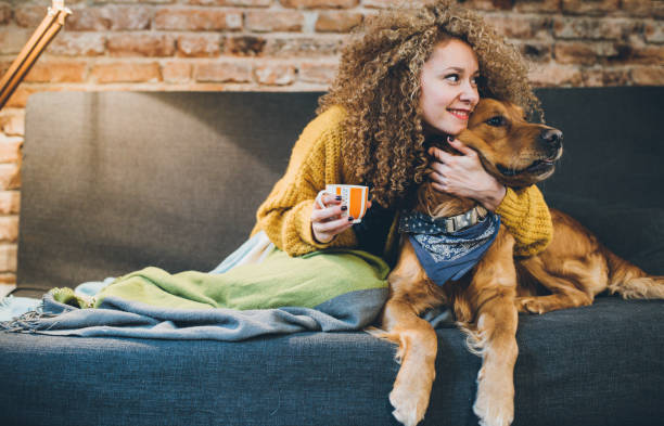 woman playing with her dogs - dog and owner stock photos and pictures