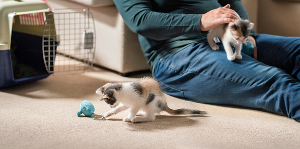 Woman playing with her newly adopted kittens at home