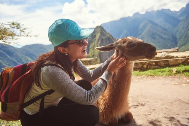 Frau spielt mit Lama – Foto