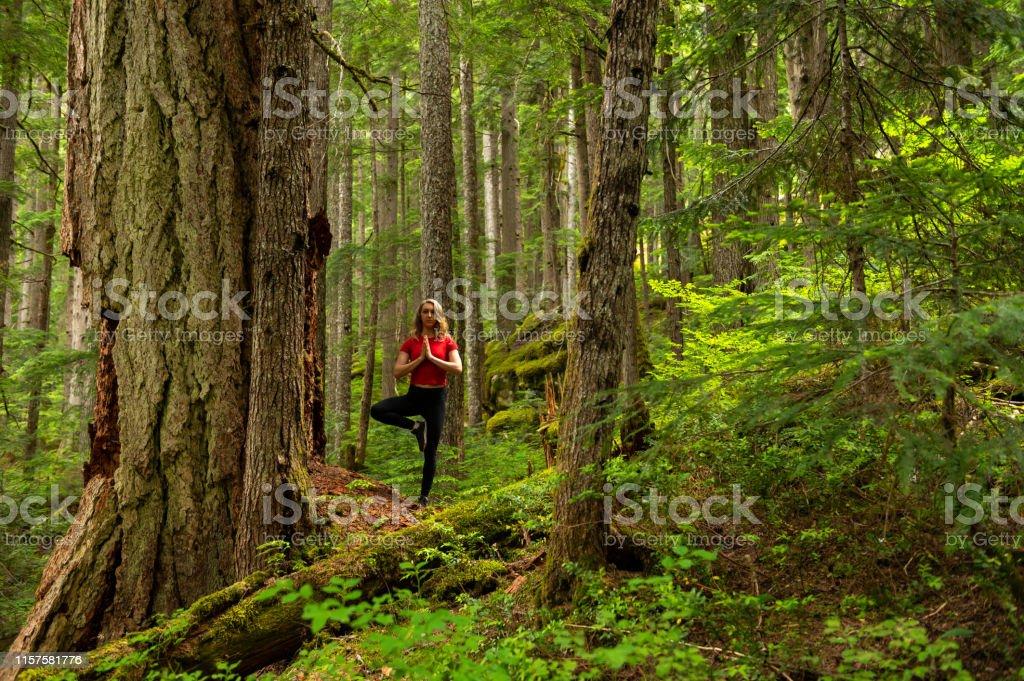 Mid adult woman practicing tree pose near cedar tree. Female hiker is...