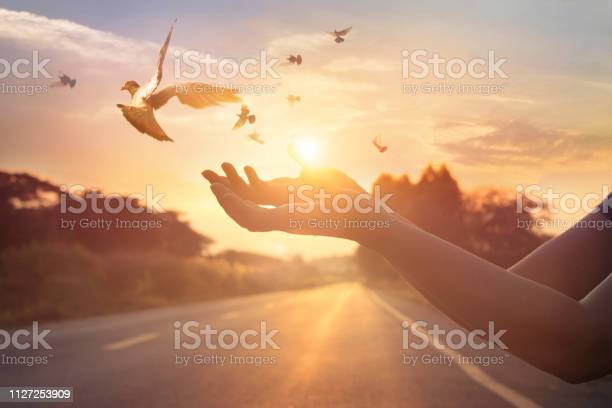 Woman praying and free bird enjoying nature on sunset background hope picture id1127253909?b=1&k=6&m=1127253909&s=612x612&h=xmnl7n16g8yla7u7zt9bcbtmsz d74zfqz cwltahac=