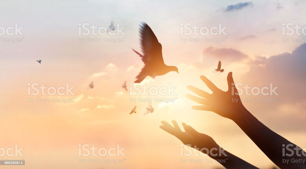 Woman praying and free bird enjoying nature on sunset background, hope concept stock photo